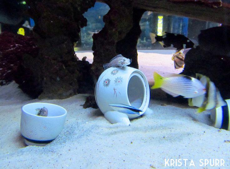 uShaka Marine World Sea World aquarium Durban South Africa