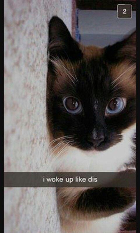 I woke up like dis