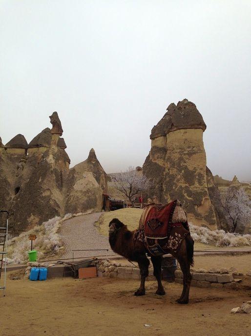 camel,  Cappadocia