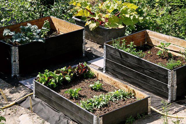 Grønnsaker i pallekarm