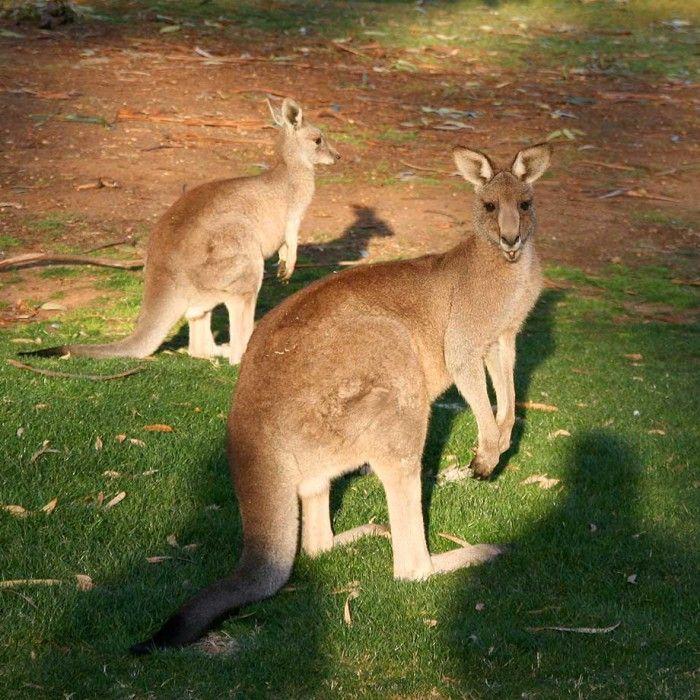 Imagenes-de-animales-salvajes-5.jpg (700×700)
