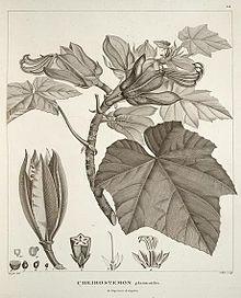 Alexander von Humboldt - Wikipedia, the free encyclopedia