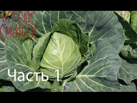 Шедевры из капусты и их рецепты - Все буде смачно - Часть 1 - Выпуск 86…