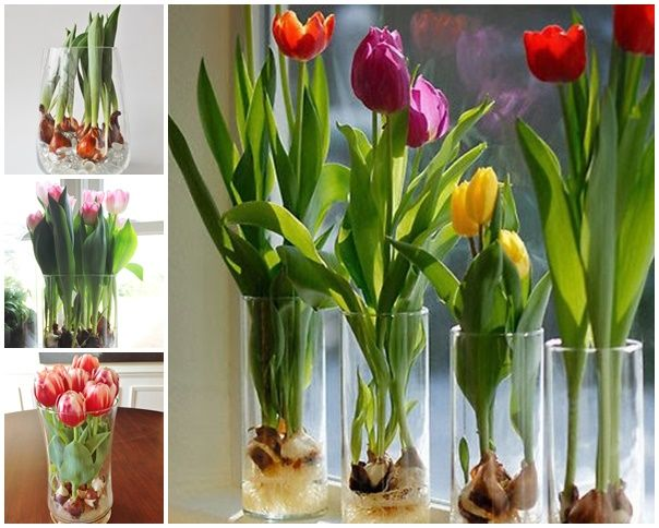 How to grow the tulips in a vase ? Just 3 steps ! #diy #home #plant