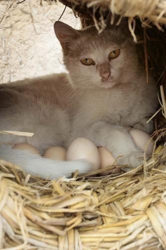 Necesitará tratamiento psicológico este gato?