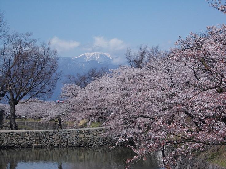Matsumoto Castle moat 2013