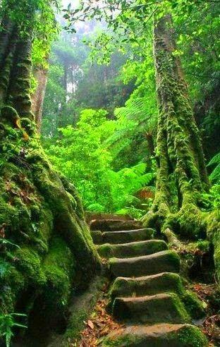 Road ~ Dreamy Nature
