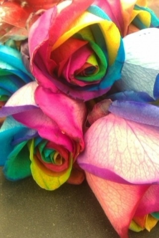 1000 ideas about rainbow flowers on pinterest rainbow for How much are rainbow roses