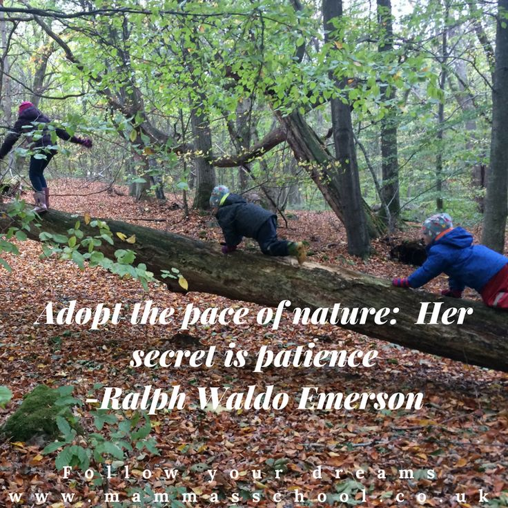Inspiration Wednesday - Patience, Nature quotes, inspirational quotes, motivational quotes, www.mammasschool.co.uk