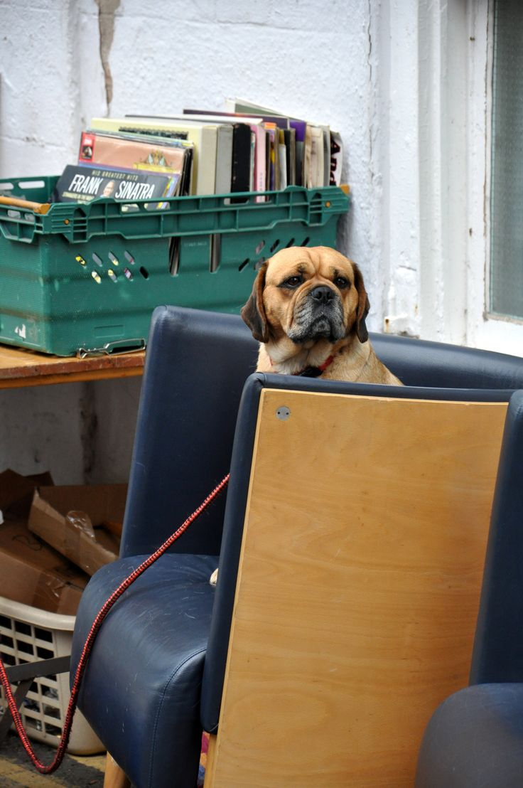 A dog loving the vintage chair.