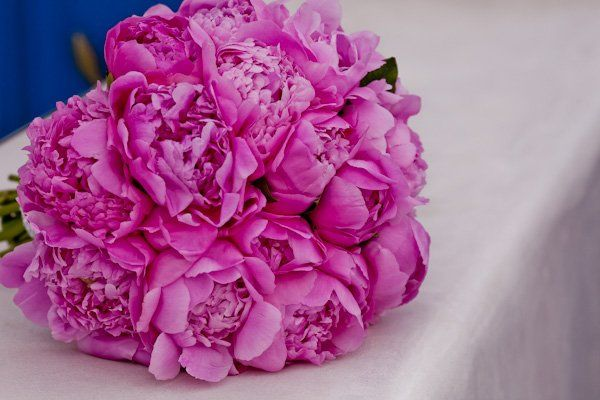 Peony BouquetPink Bouquets, Perfect Colors, Bold Colors, Peonies Bouquets, Pink Peonies, Wedding Flowers For Nov
