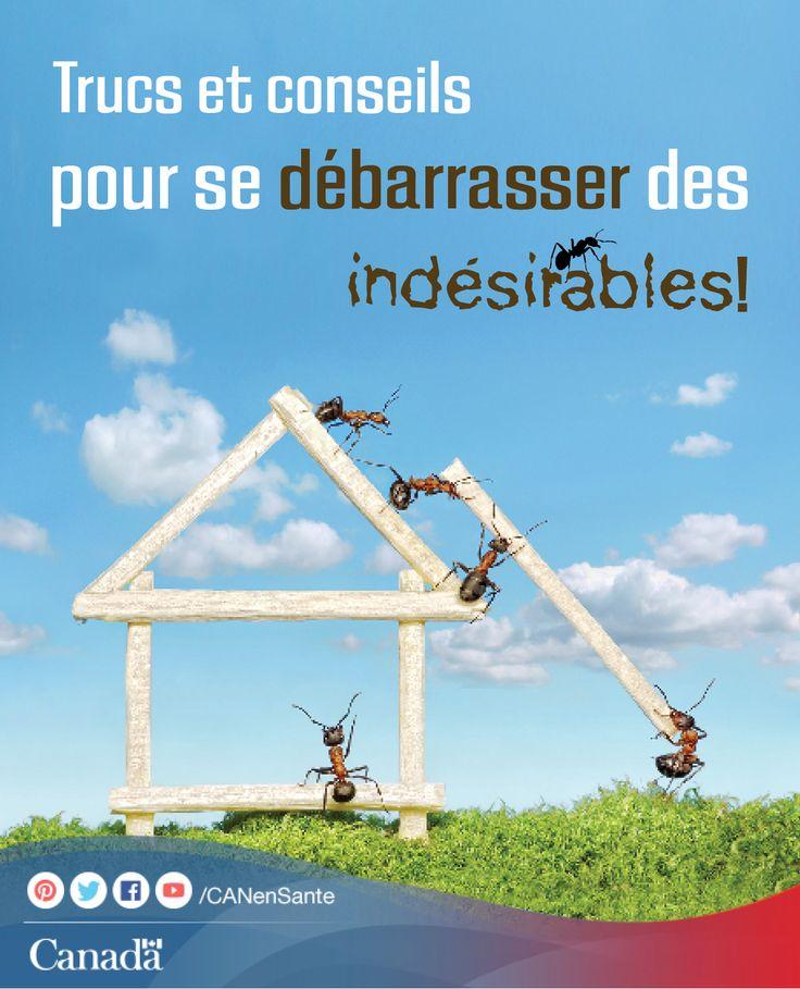 Renseignez-vous sur les fourmis charpentières et comment vous débarrasser de ces insectes et autres organismes nuisibles ici :  http://www.canadiensensante.gc.ca/health-sante/environment-environnement/pesticides/carp-ants-fourmis-charp-fra.php?utm_source=pinterest_hcdns&utm_medium=social&utm_content=Aug5_ants_FR&utm_campaign=social_media_14