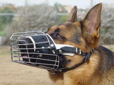 Aus der Kategorie Maulkörbe  gibt es, zum Preis von EUR 28,00  <b> Möchten Sie Komfort für Ihren Hund gerne? </b><br> <ul> <li> Der obere Teil der Schnauze in der Schnauze ist aus Leder, sondern auch gefüttert und gepolstert mit Filz für den Komfort des Hundes. </li> <li> Haben Sie Probleme beim Tierarzt oder Groomer Besuch? Holen Sie sich dieses Schnauze und lösen das Problem </li> <li> benötigen zuverlässige Produkte für Tierärzte, Hundetrainer und Behaviorist empfohlen? Der Maulkorb ist…