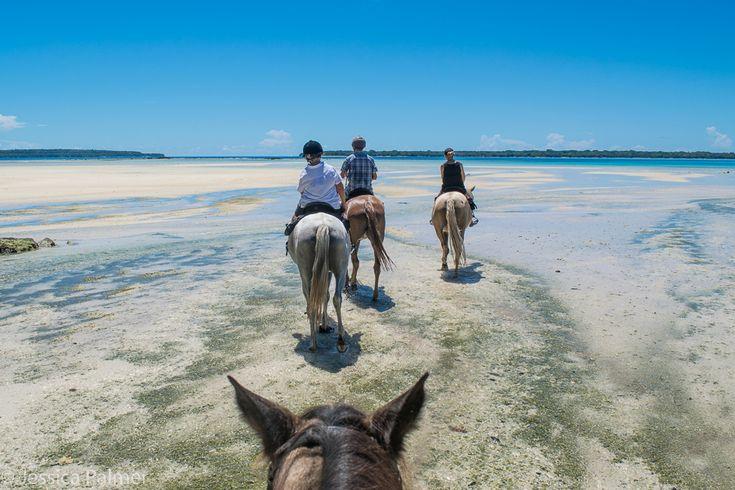 Horse riding on the beach and through the water on the island of Espiritu Santo, Vanuatu. Click the image above for 10 things to do in Espiritu Santo (Vanuatu) with kids