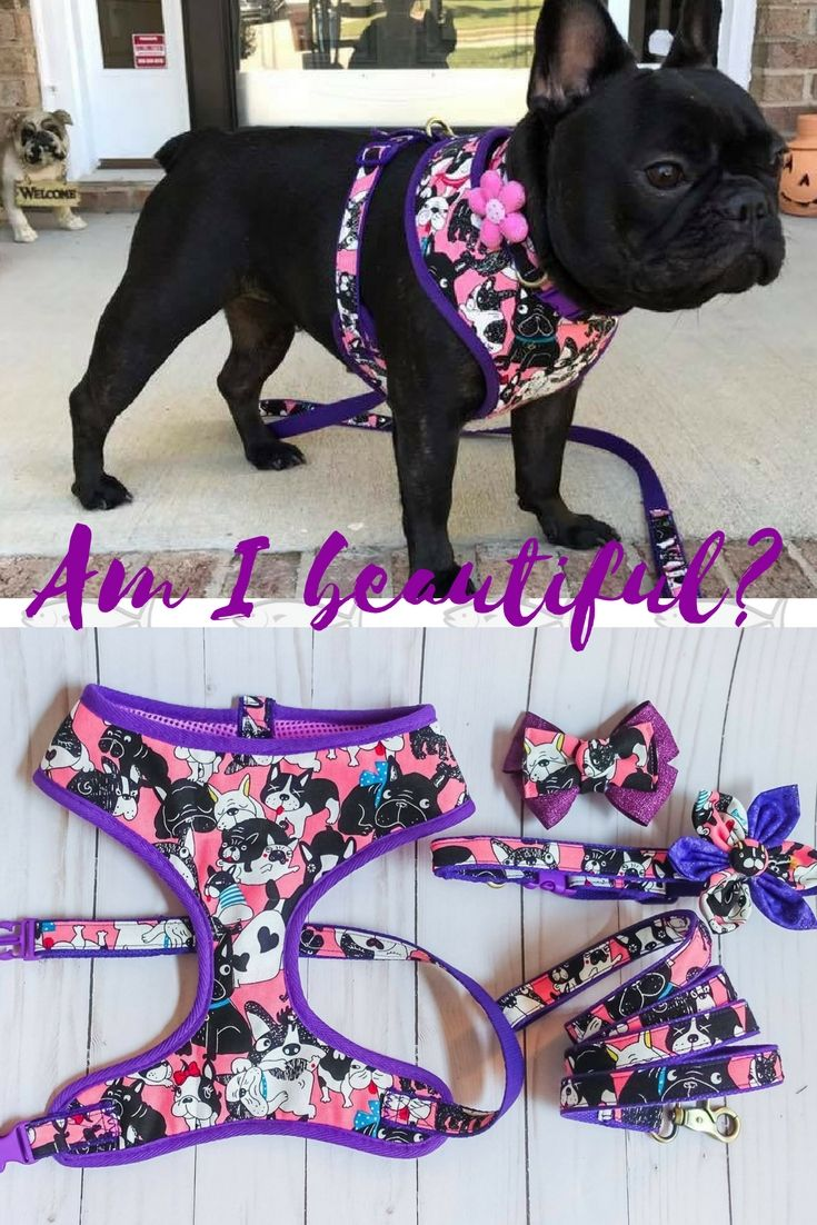 Pink Girl French bulldog harness collar leash set fd07c3a8b