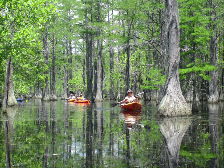 Get a great view of the fall foliage from a canoe or kayak on these scenic paddling trips at six Georgia State Parks this fall.
