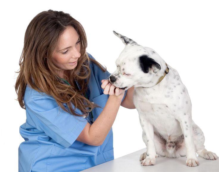 Men vi mennesker er generelt gode til at afkode hundes sindsstemning, viser ny undersøgelse.