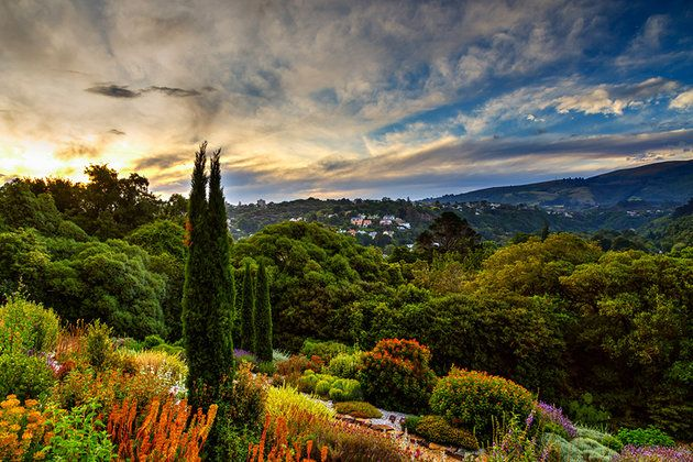 paintings of new zealand gardens - Google Search