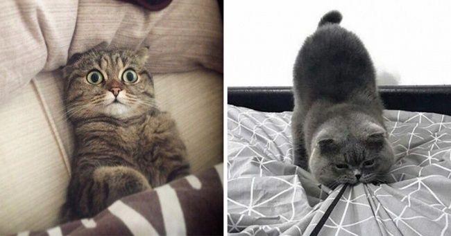 20 frische Fotos, die beweisen, dass nichts aufregender ist als das Leben einer Katze