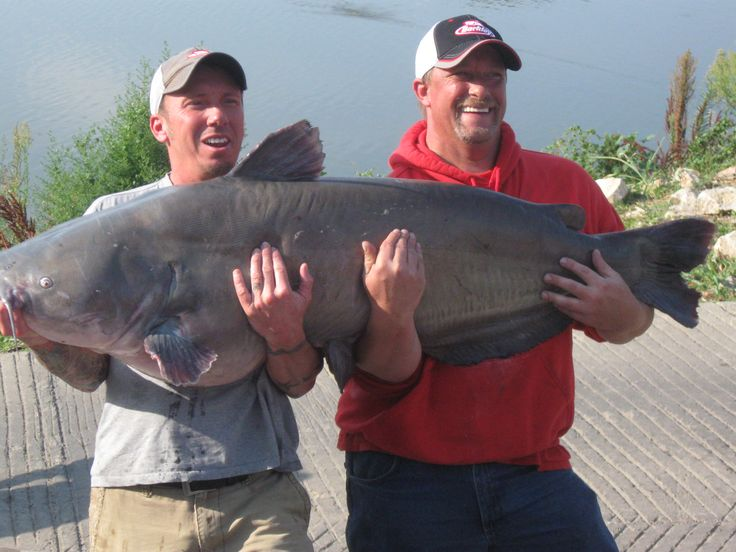 Rob and brad holding the pending ks state record blue for State record fish