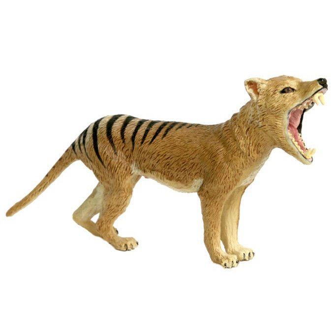 Thylacine Male Tasmanian Tiger