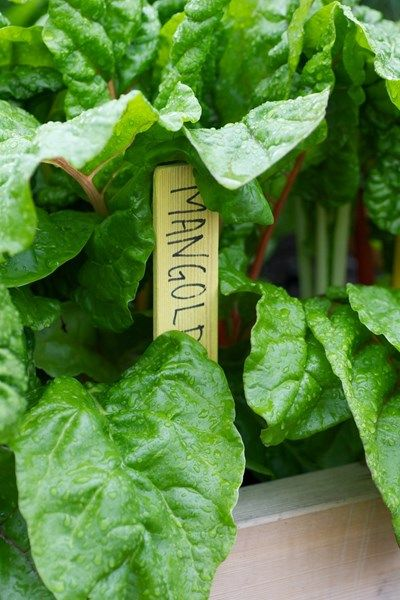 Growing vegetables at home - How to do it