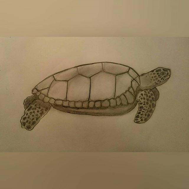 #artpurplefeature #turtle #drawing_pencil #draw #drawing #drawingoftheday #artmagazine #artist_4_shoutout #art #arts #watercolour #realisticdrawing #realistic @top.draw #artwork #sketch #rad_artworks #bouchac #worldoftalent #worldofpencils #arts_gallery #drawofinsta #Sketch  #rad_artworks #purple #artist_sharing #artmagazine #pencil #pencildrawing #art_realistisch #drawingrealist #animal #drawanimal