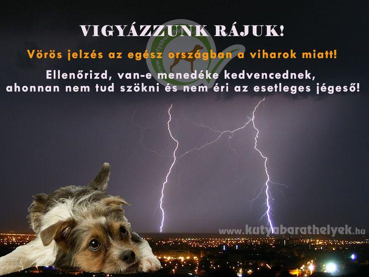 Nem elég a kánikula, az időjárás újabb szélsőséggel készül: Délutánra jósolják a hidegfront érkezését! Vihar, jégeső, hatalmas szél! Nagyon sok kutya retteg a vihartól! Vigyázzatok rájuk, ilyenkor gyakran menekülnének! Ellenőrizzétek, hogy nem tud-e megszökni kutyátok, macskátok! Azt is biztosítsátok kutyáitoknak (ha a lakásba nem mehet be), hogy legyen egy hely, ahol meghúzhatja magát a vihar, jégeső idején (kutyaház, garázs stb)!  #kutya #vihar #veszély #kutyabaráthelyek