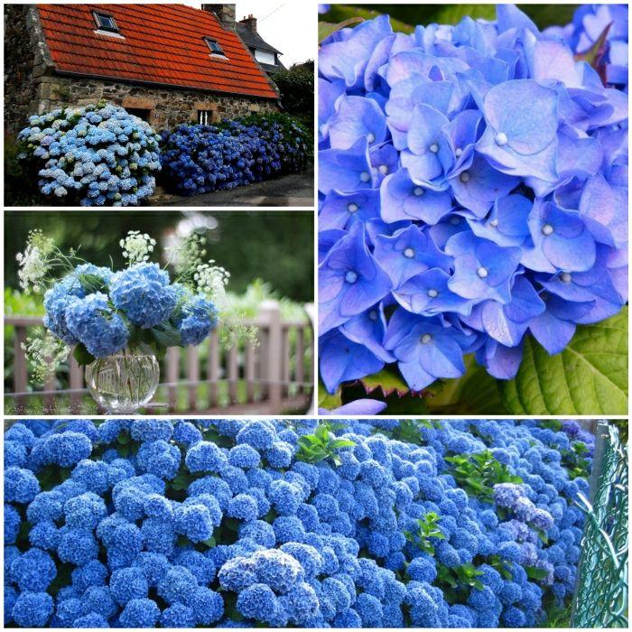 23 besten Hortensien Bilder auf Pinterest Hortensien, Garten