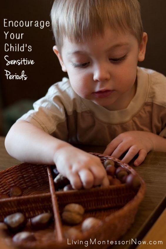 Montessori Sensitive Periods of Development