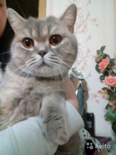 Продам Британские котята0 http://kovrov.city/wboard-view-7790.html  продаются британские котятки,очень милые и ласковые