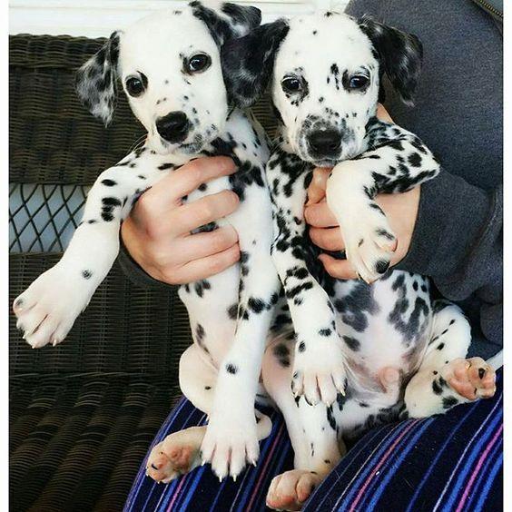 I'll take two, please ❤: