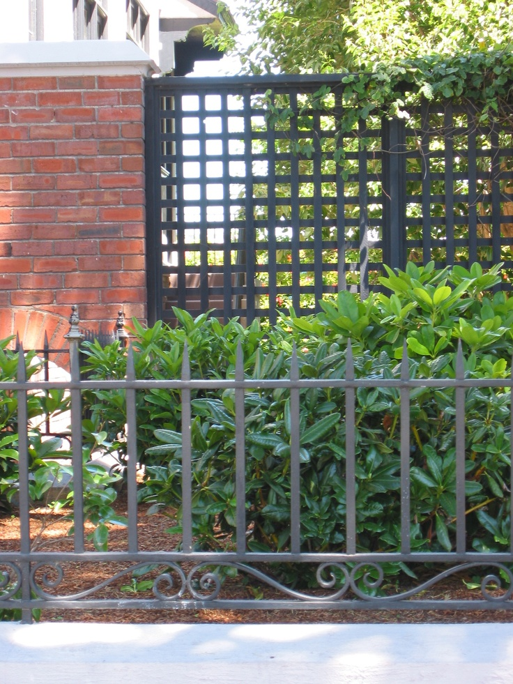 The Black Lattice Fence Could Be Nice Too With Greenery In