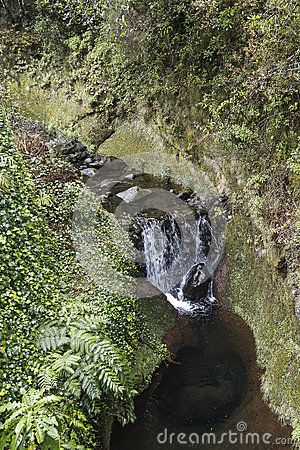 Waterfal lin Small village in Nation Park Ribeiro Frio on Madeira Island , Portugal. Europe . Place full of fish restaurants .