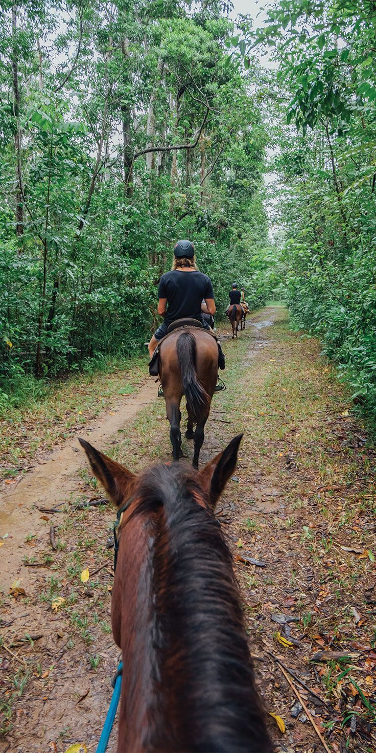 Heading into the Daintree on horseback - by Jason Charles Hill