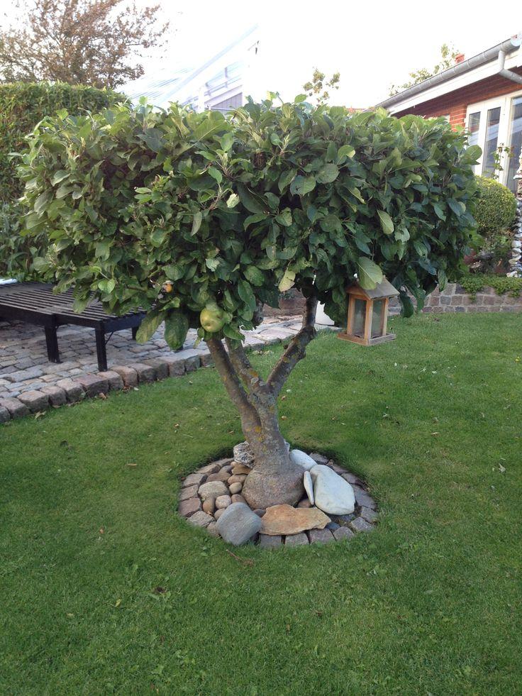 træ til små haver - klip!