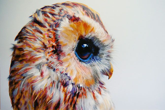 7 illustration john pusateri owl chouette Illustrations par John Pusateri : Des Chouettes Hyper Réalistes