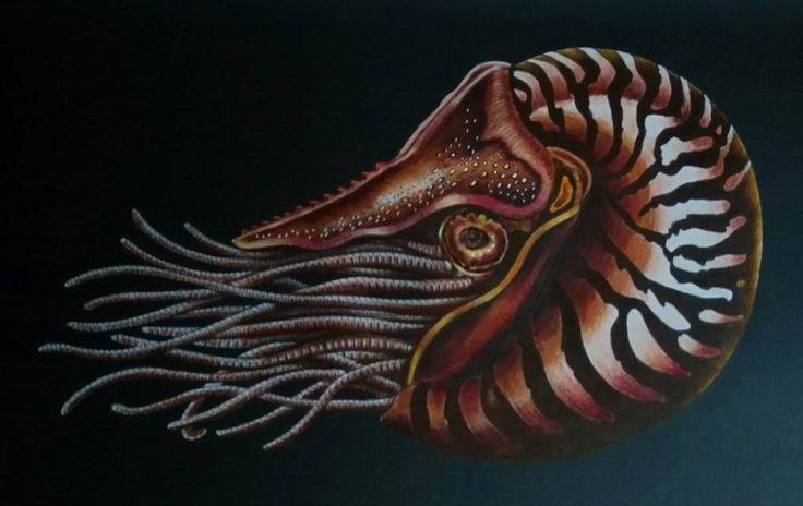 Nautilus By Vanessa Nessy Peeters