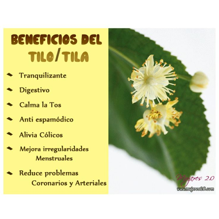 Best 17 Infusiones - Infusions images on Pinterest