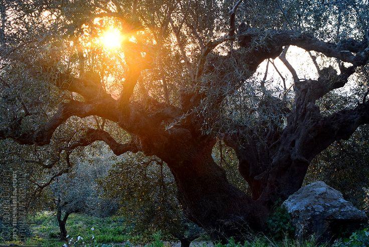 Ephemeris XXXV-The Firebird…at last   My Messinia
