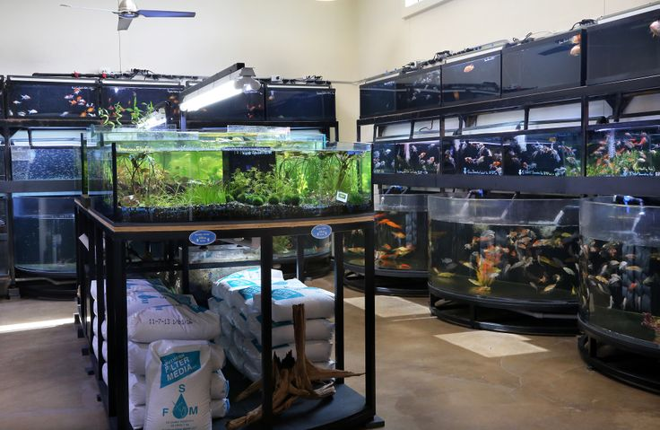 11 best austin store images on pinterest fishing peach for Fish store austin
