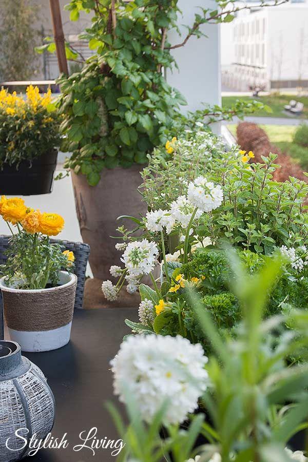1000+ ideas about Kräutergarten Balkon on Pinterest ...