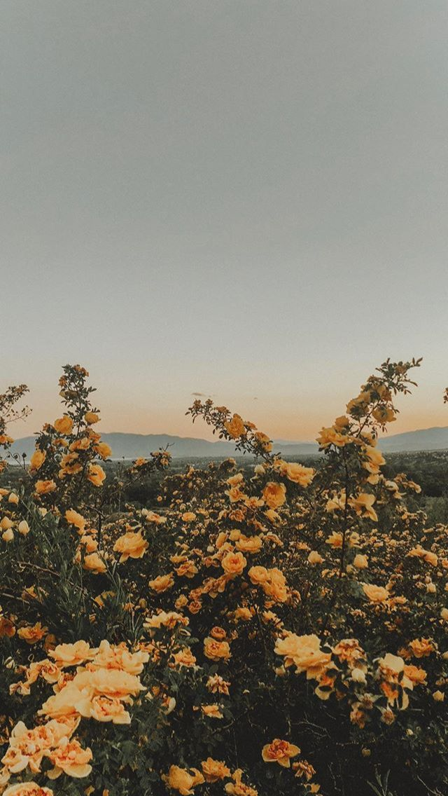 Love Pastel Sunset Vintage Flowers Film Filter Yellow Flower