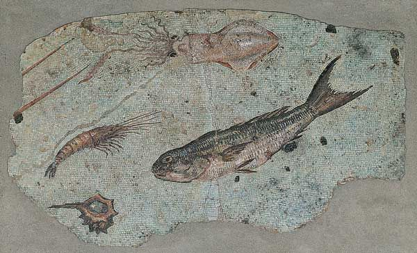 Mosaic with maritime scenes / Animals / Route by subject - Centrale Montemartini