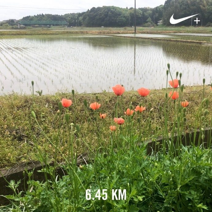 心にゆとりを   ランニング日記(2017.04.27)   ランニング   走る薬剤師 大徳秀幸 公式ブログ