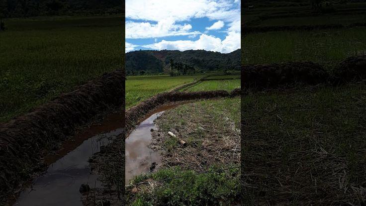 PORBI L. SIKAPING, Kabun Pengen Tampil (KPT) Talu, Tinggam