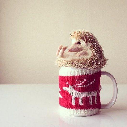 Best HEDGEHOGS Images On Pinterest Animals Photos Black Trim - Darcy cutest hedgehog ever