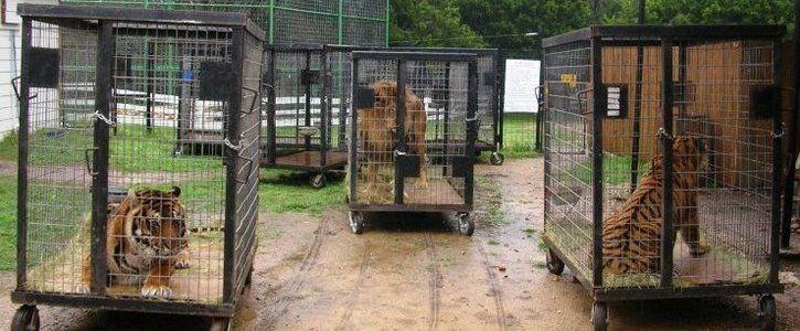 Punem capăt exploatării animalelor sălbatice în circuri