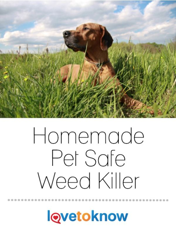 A Pet Safe Weed Killer Can Kill Weeds In Your Lawn Or Garden But Won 39 T Hurt Your Furry Friends