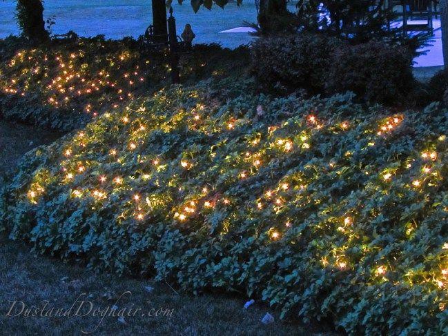 Garden Lighting U2013 U201cMagicalu201d Ground Cover